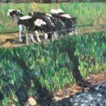 Heeze Cows #1  ~  Karen Krulevitch, Santa Barbara, CA  2017  •  11 x 14