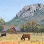 Cows near Hollister Peak  ~   Erica Pitkin, Fort Leavenworth, KS  2015 • 18 x 14
