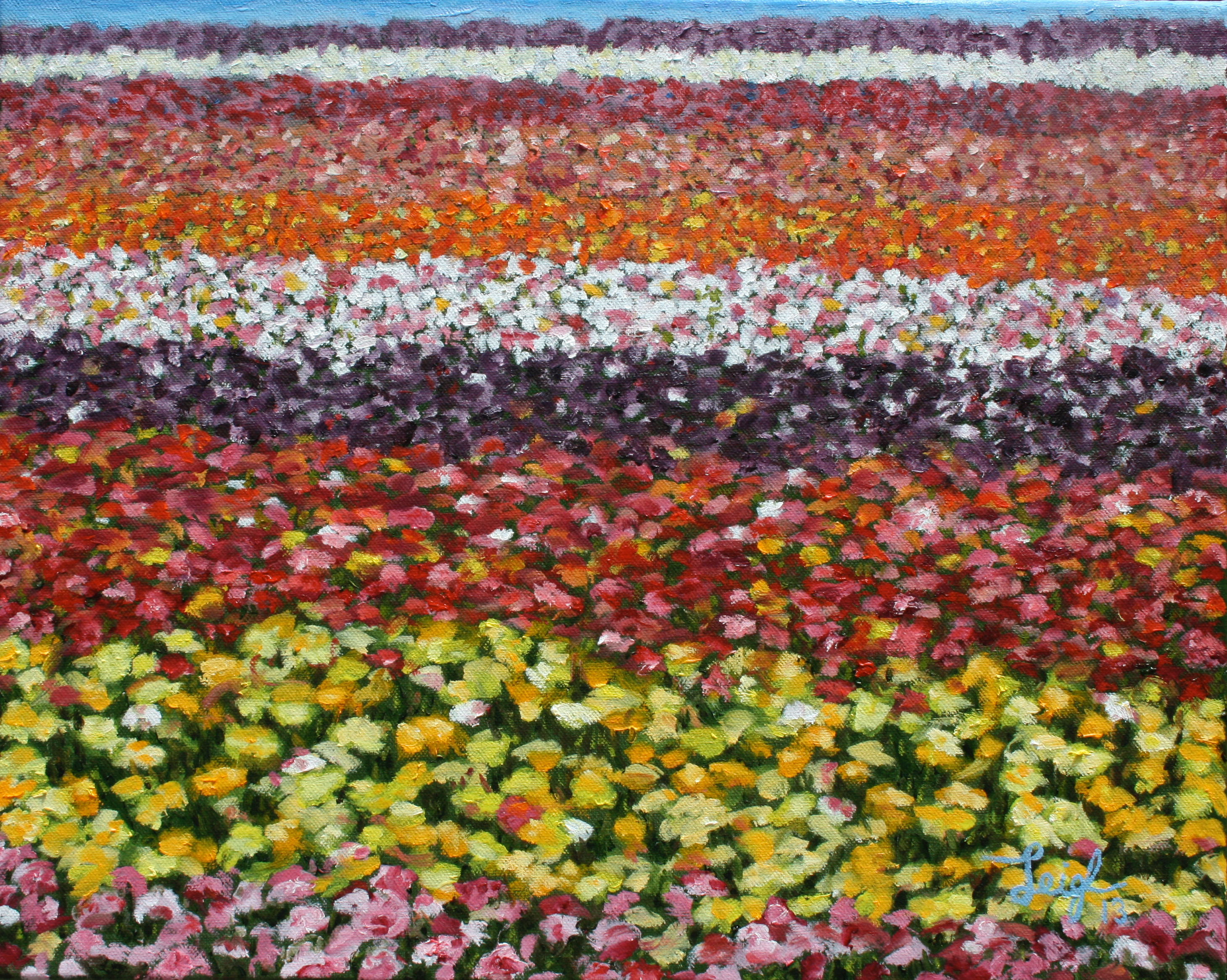Carlsbad Flower Fields #2  ~   Private Party Carlsbad, CA 2013 • 20 x 16