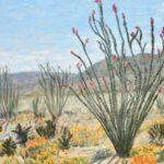 Anza Super Bloom #2 (Ocotillos)  ~  Art and Rochelle Lipson, Cottonwood Heights, UT 2019  •  20 x 16